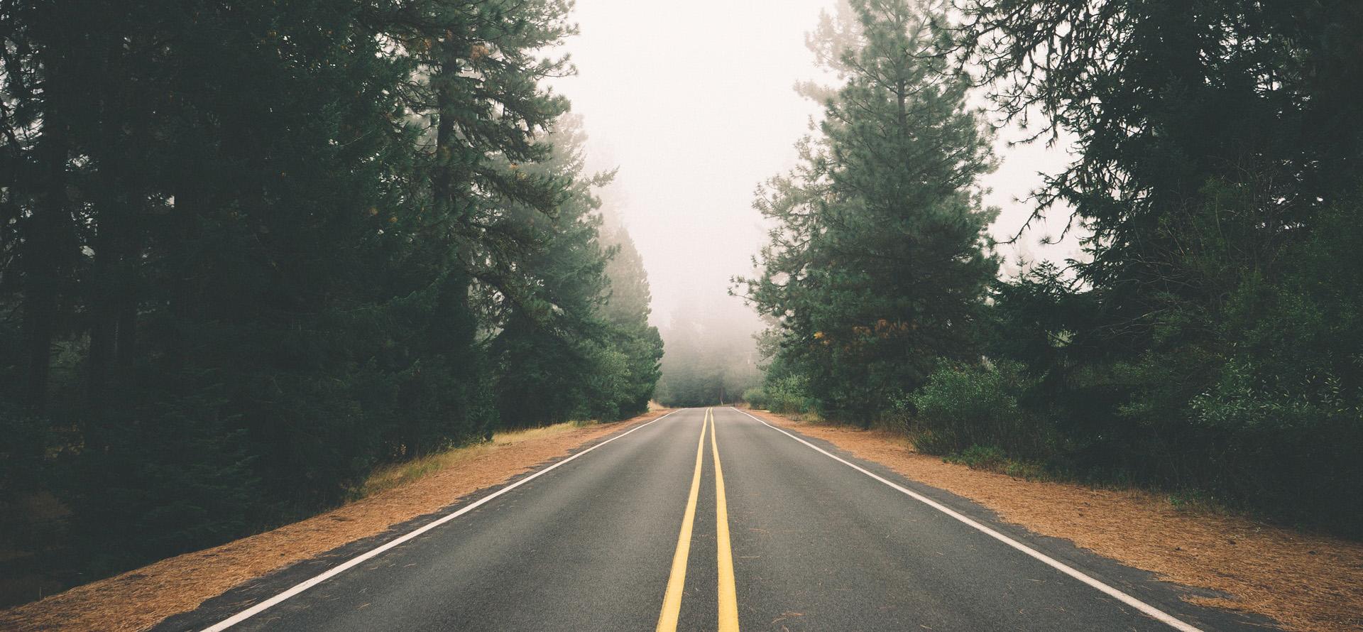 fog-foggy-forest-4765